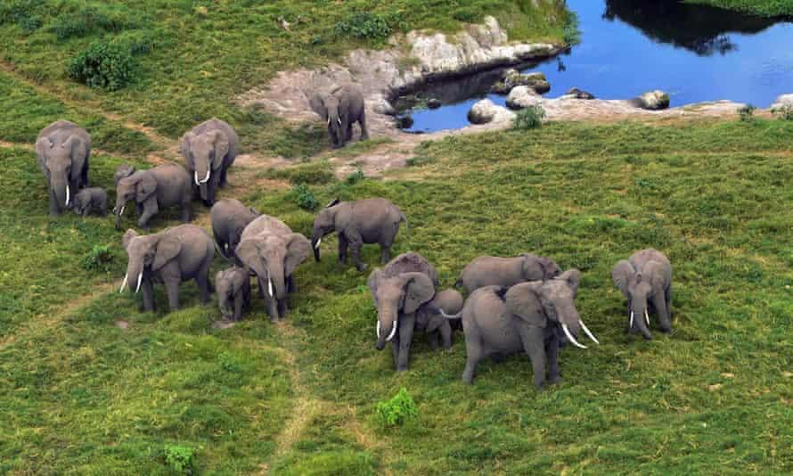 African elephants in Amboseli national park, Kenya.