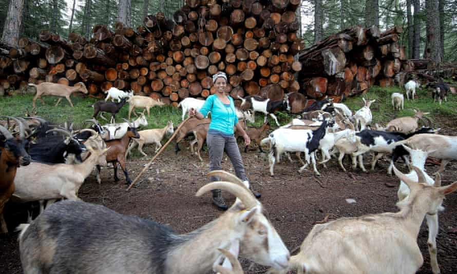 Agitu Ideo Gudeta stearted with just 15 goats, increasing the herd to 180 in just a few years.