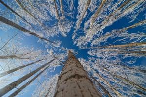 Tunceli, Turkey: Snow and ice adorn trees in Ovacık district