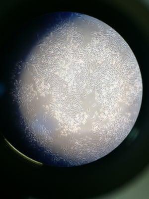 Moon:cells by Matthew Lee