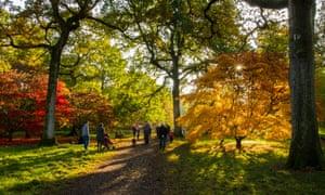 「Westonbirt National Forest Park (UK)」の画像検索結果