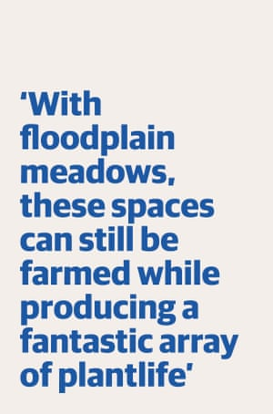 Quote: 'With floodplain meadows, these spaces can still be farmed while producing a fantastic array of plantlife'