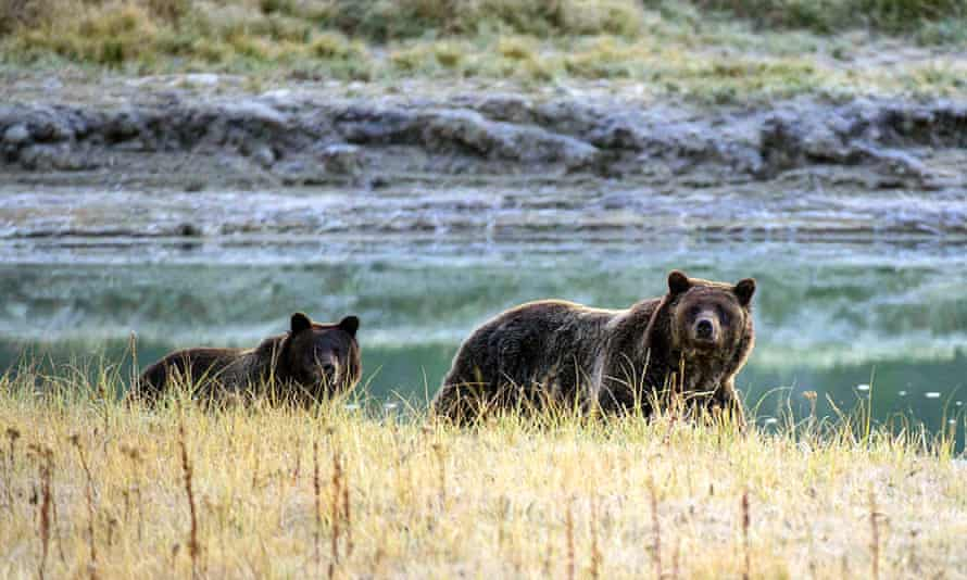 The Trump administration rolled back key provisions of the Endangered Species Act, a law credited with saving the gray wolf, bald eagle and grizzly bear.