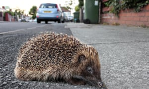 The habitats of already-endangered species such as hedgehogs may be under threat.