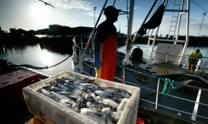 Kevin West, skipper of the Ryanwood fishing boat unloads his catch of mostly haddock at the Peterhead fishmarket, Scotland