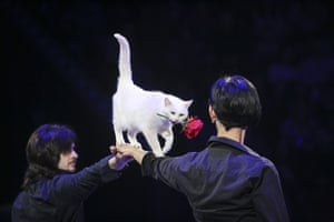 Kiev, Ukraine. A cat performs during Black and White, Up and Down show at the National Circus of Ukraine