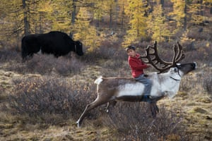 A young boy on the back of a reindeer
