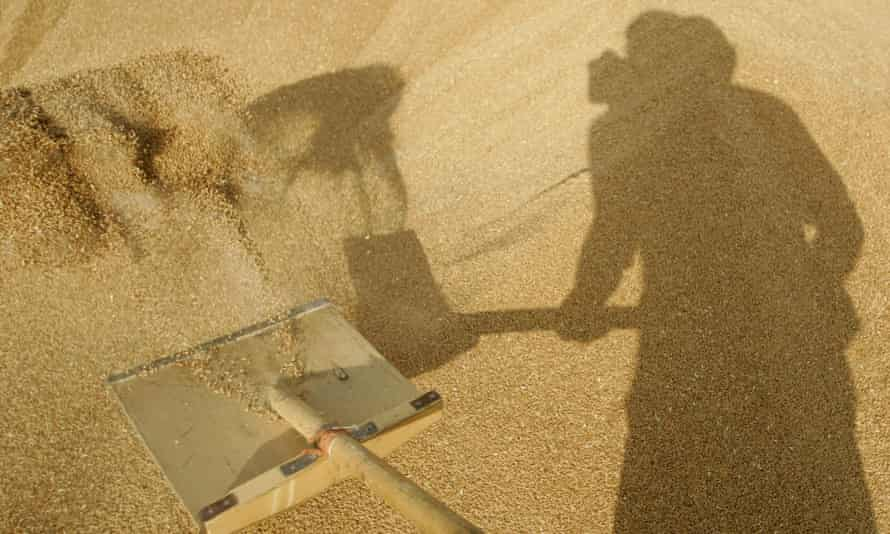 A Russian man shovels grain at a farm in Vasyurinskoe during the country's worst drought in decades in August 2010.