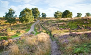 Heart of England Way showing a footpath across area of outstanding natural beauty, Cannock Chase, Staffordshire