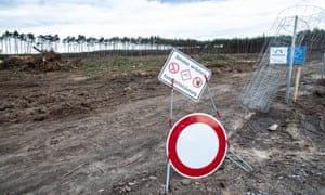 Trees are cut down at the determined site of the Tesla gigafactory near Berlin.