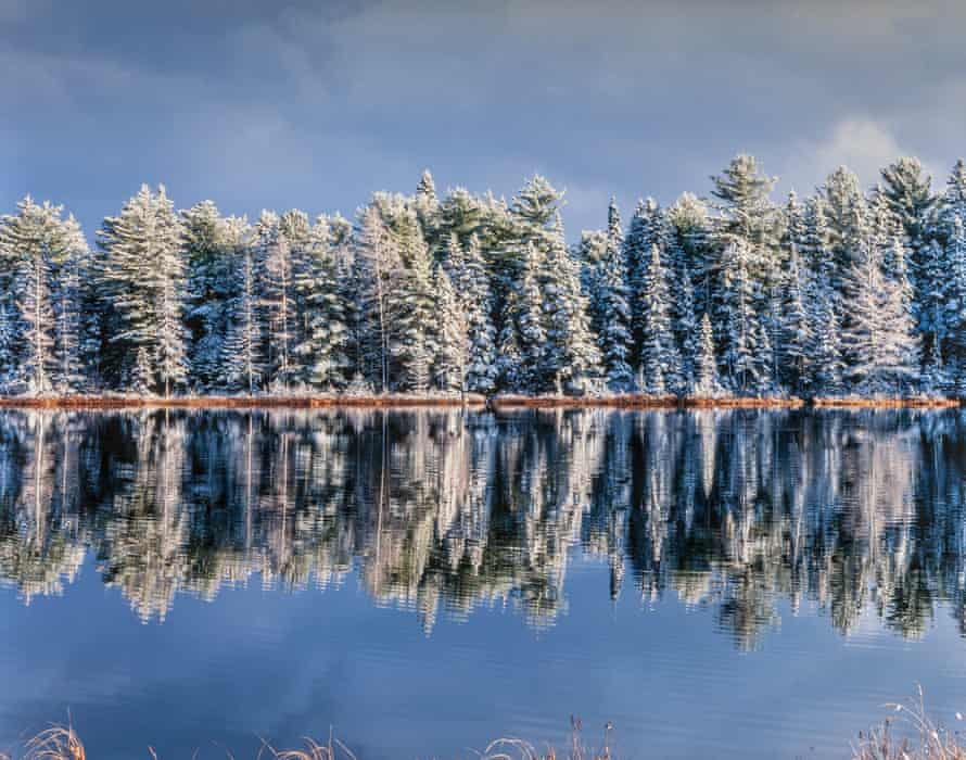 Snow covered trees reflected in Mew Lake, Algonquin Provincial Park, Ontario