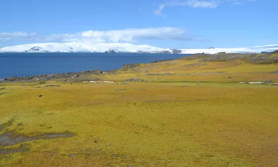 A moss bank on Green Island