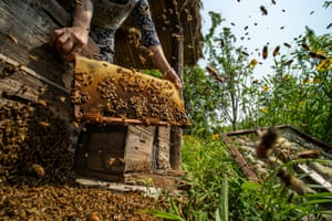 Food in the Field - When the Hive is Filled by Xiaodong Sun, China