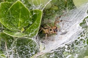 A spider on a web near wild wetland in Sangju, South Korea