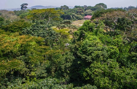 The Zika forest in Uganda, where the Zika virus was first discovered in April 1947