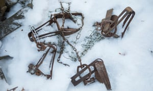 Traps used by poachers against tigers, lynx and wolves.