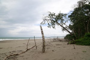 A dead tree on the beach of Cahuita national park in Costa Rica. Rising sea level has eroded 50 meters of beach along the coast