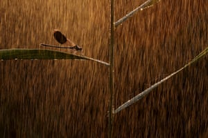 Golden rain by Norbert Kaszás