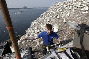 The Bass Rock gannet colony