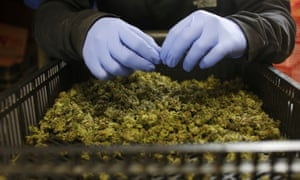 The legislation will also allow terminally ill patients to smoke illegal pot without fear of prosecution.