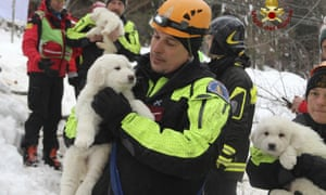 Firefighters hold three puppies that were found alive in the rubble of the avalanche-hit hotel.