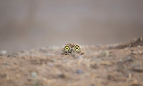 Comedy Wildlife Photography Awards - in pictures