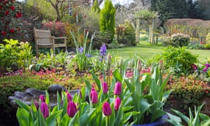 A pretty garden in Surrey
