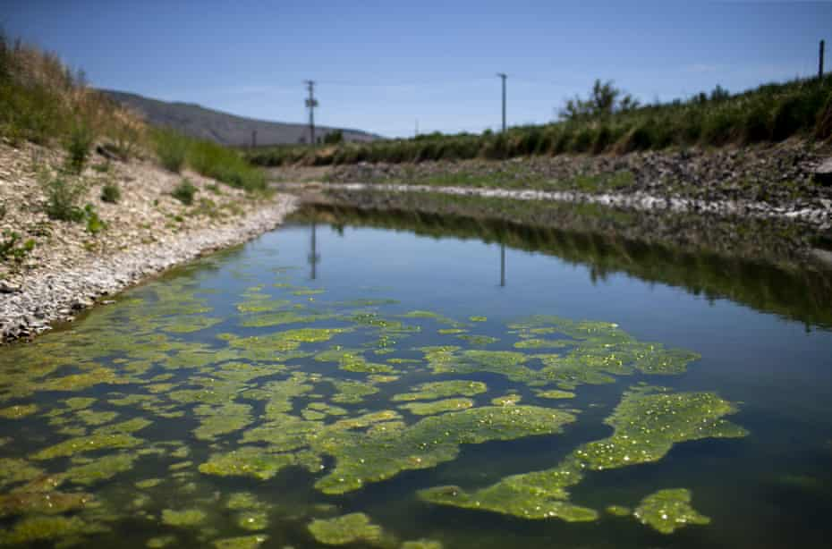 Shallow, stagnant water lines the 'A Canal' in Klamath Falls, Oregon, on Tuesday.