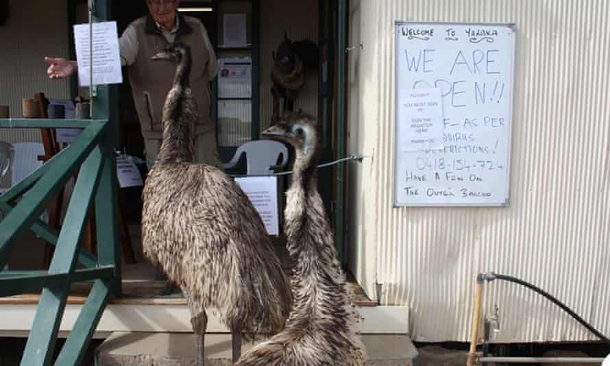The Yaraka Hotel in outback Queensland has banned the local emus, Kevin and Carol ,from entering the pub due to bad behaviour.