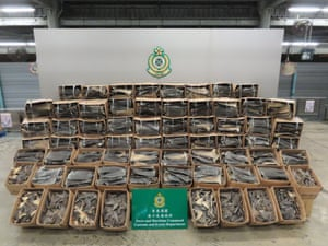 A photo by the Hong Kong Customs and Excise Department shows seized shark fins at a customs facility in Hong Kong, China. The department has made its largest shark fin seizure ever, uncovering 26 tonnes taken from 38,500 endangered sharks inside a pair of shipping containers from South America worth an estimated HK$8.6m (US$1.1m).