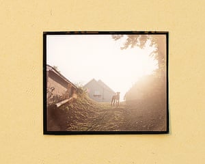 Dog on Hill (Sunrise), Omaha, NE