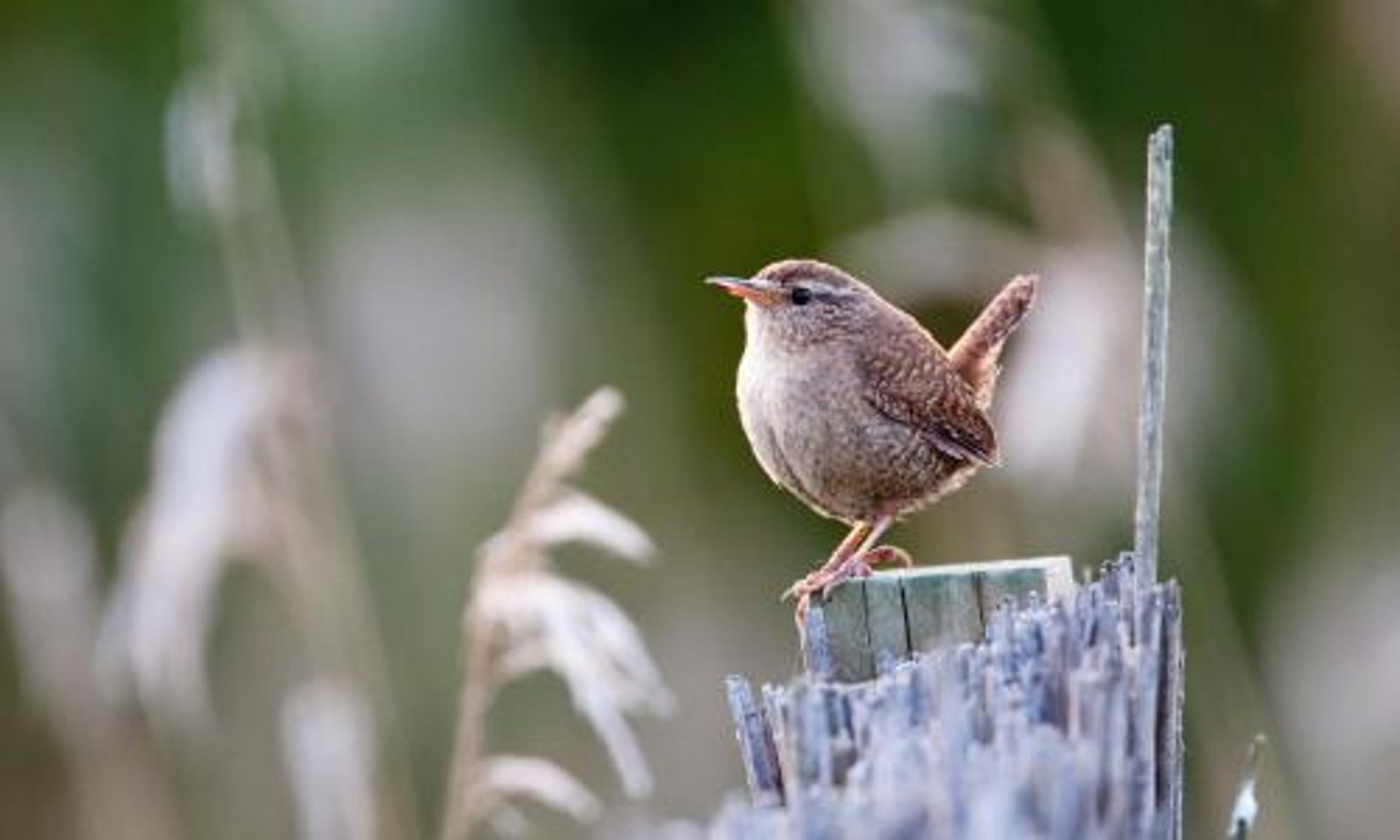 雀の冬景色画像