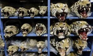 Illegal wildlife trafficking