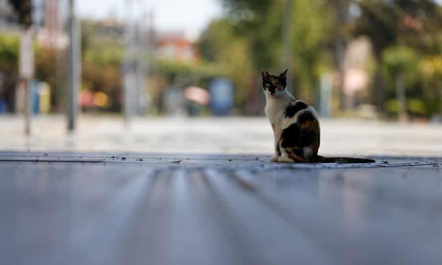 A cat is seen on an empty street in Antalya, Turkey. For the sixth consecutive year Chicago was named the 'rattiest city' in a poll conducted by Orkin, a US pest control company.