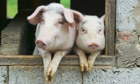 Is a family eating their pet pig the most 'transgressive' idea on TV?