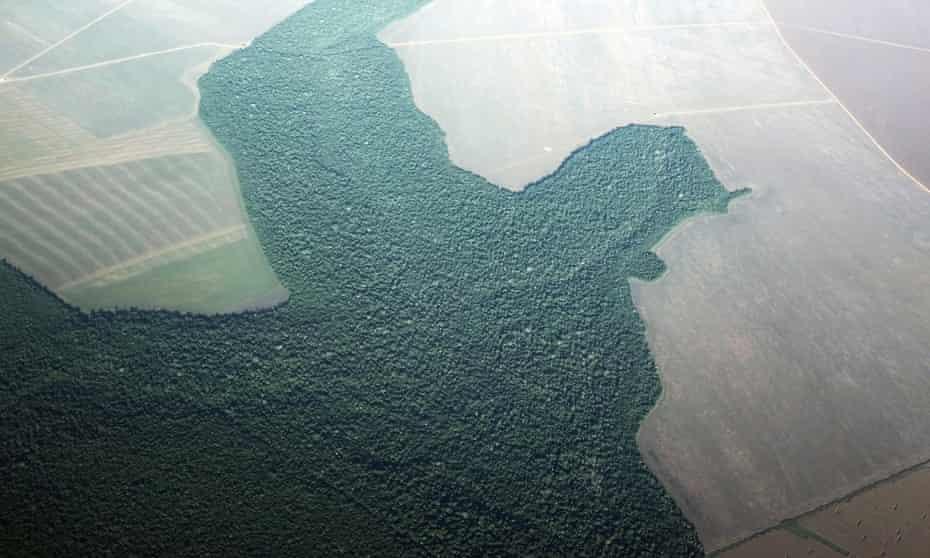 Amazon rainforest turned into farmland