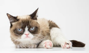 Grumpy Cat visits HMV in London in July 2016