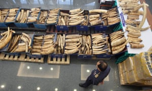 A Thai customs agent stands over a seized shipment of ivory from Uganda and Kenya worth more than $500,000.