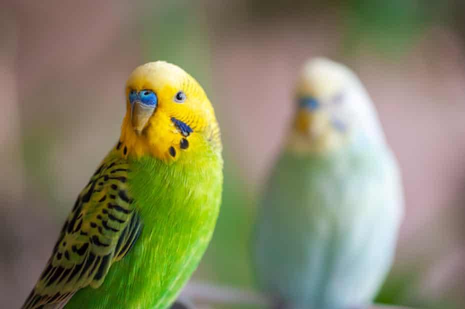 Two birds looking at camera