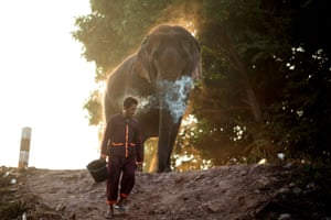 Sayaboury province, Laos A mahout man walks with an elephant after bathing him in a river, before taking part in an elephant festival