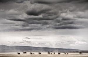photo of mammals under a big grey sky