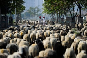 Nomadic shepherds lead their sheep along a road on the outskirts of Faridabad