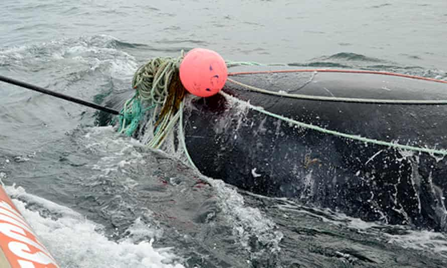 Joe Howlett helped rescue a young right whale tangled in fishing gear in Canada's Bay of Fundy.