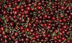 Box of harvested red ripe cherry fruit variety RiversCountry Diary 29 July 2015 by Virginia Spiers: harvested red ripe cherry fruit variety Rivers