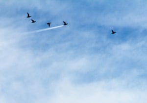 John Threlfal won the Up in the Air category with this shot of a duck flying in front of a plane trail in Preston, UK.