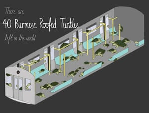 There are approximately 40 Burmese roofed turtles left in the world