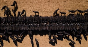An aerial view of the cattle feeding operation on the property Toorawandi owned by Coonabrabran farmer Ambrose Doolan and his wife Lisa.