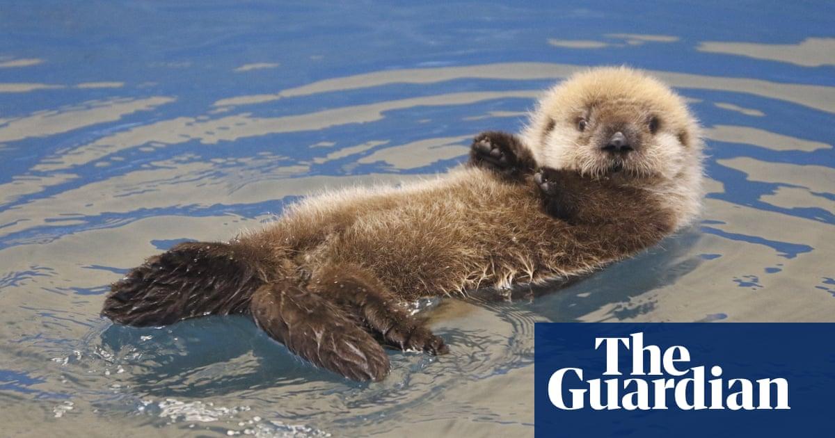 The Alaska facility giving aquatic animals a 'second chance at life'
