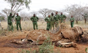Kenyan wildlife rangers stand near the carcass of an elephant, in Tsavo East, Kenya. Poaching is one of the biggest threats to animals worldwide.