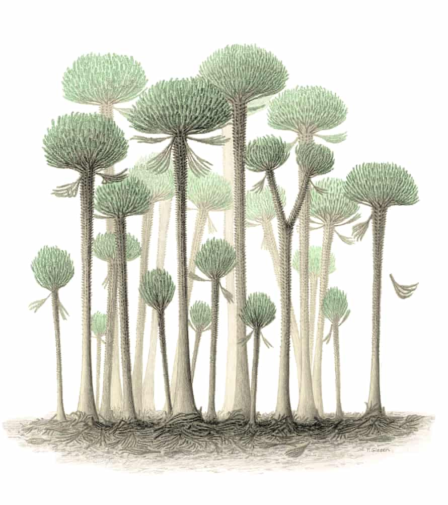 An artist's impression of a fossil forest.